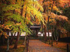 地蔵院:山門と参道