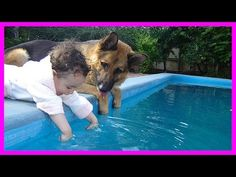 Dog And Baby Take A Swim Very Funny Time - YouTube
