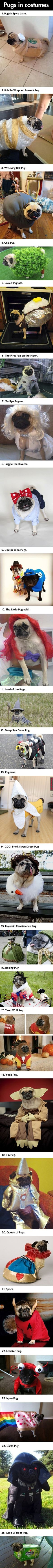 Pugs In Costumes!!! for more funny pictures visit wwww.funnypics.in