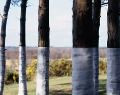 Fabric Wrapped Around Trees Creates Compelling Visual Interventions. Zander Olsen - Photography