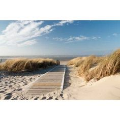 Install this gorgeous Windswept Beach Boardwalk wallpaper in your bathroom to bring the seaside indoors! Custom-made to fit your wall. Bora Bora, Beach Boardwalk, Decoration Originale, Baltic Sea, Photo Wallpaper, Sun Lounger, Holland, Wall Murals, Seaside