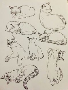 January 2018 Sketchbook about Behance - character design & Tutos - . - January 2018 sketchbook about Behance – character design & tutos – - Animal Sketches, Animal Drawings, Pencil Drawings, Cat Reference, Art Reference Poses, Cat Sketch, Drawing Sketches, Drawing Art, Drawing Techniques