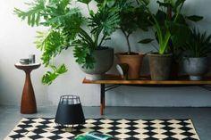 xanadu plantes intérieur
