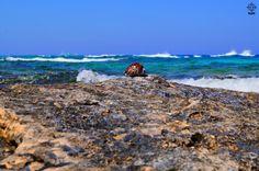 Al-Gharam Beach, Mersa Matruoh مرسى مطروح شاطئ الغرام Arabic Tiger Cowry Shell…