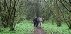 Eselwanderung: Grüne Verführung auf der Weide