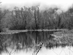 roseannadana: Back on my home turf posted a photo:  Winter Creek and Pond in Black and White