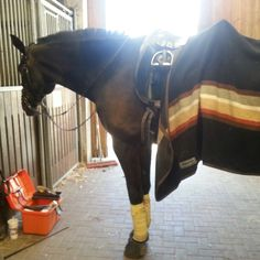 #horselove