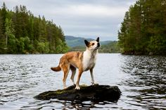 Andrew Fladeboe turns his lens to working dogs, showcasing canine talent and dedication in the three-part series The Shepherd's Realm. Usually content with a simple pat of praise after a long day's work, the noble dogs in these photos get a moment of fame and recognition for all the hard jobs they accomplish. Frozen in …
