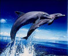 Whale, Animals, Whales, Animales, Animaux, Animal, Animais