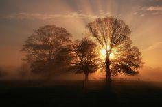 Tree Burst - Great rays of light on this photo!