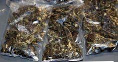 Consigna pgr a una persona por posesión de más de 13 kilos de marihuana