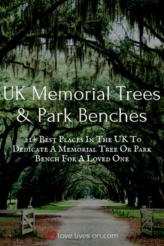 21 Best Places For Memorial Benches Trees