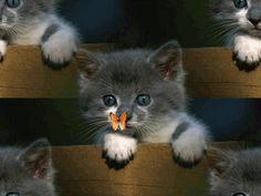 un chaton et un papillon... <3 <3 <3