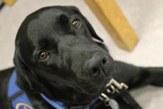 Meet Joey, Magee Rehab Hospital's new therapy dog. Petting him, and tug-of-war  is some of the funnest therapy ever. Cute!