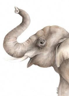 The elephant has been painted on high quality watercolour paper with watercolour paints. x Original Elephant painting. This painting may be reproduced by myself only. Watercolor Animals, Watercolor Print, Watercolor Illustration, Watercolor Paintings, Original Paintings, Nursery Artwork, Nursery Paintings, Elephant Paintings, Elephant Illustration