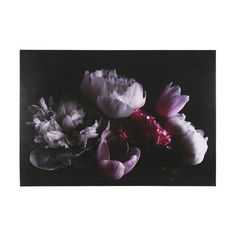 Large Floral Print | Kmart