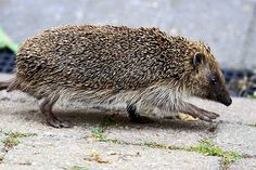 You dont often see Hedgehogs wandering round the garden in the daytime.
