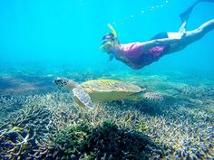 Gemma getting a good look at this guy as he casually cruises around the reef on Great Keppel Island. by homeintransit http://ift.tt/1UokkV2