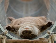 #crazyotterlady? if cats did not exist, I would have otters running around my house.
