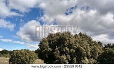 Trees With Rain Clouds In The Sky    #photostock  #stockphoto #sky #paisajes #landscape