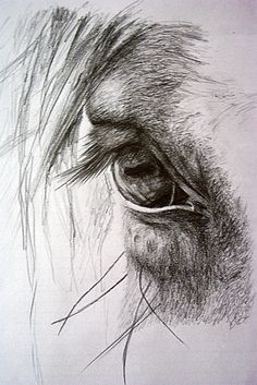 It's in their eyes…some of my favorite photos are the ones I take of a horses eye! Es ist in ihren Augen … einige meiner Lieblingsfotos sind die, die ich von einem Pferdeauge nehme! Pencil Drawings Of Animals, Horse Drawings, Animal Sketches, Drawing Sketches, Art Drawings, Drawing Ideas, Sketching, Horse Pencil Drawing, Pencil Art