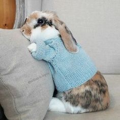 Oooo a bunny in a sweater! Cute Baby Bunnies, Funny Bunnies, Cute Baby Animals, Funny Animals, Bunny Care, Fluffy Bunny, Hamster, Pet Rabbit, Pet Bunny Rabbits