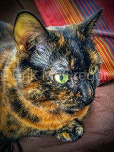 LOOKING INTO THE FUTURE  (New Years Cat) - Composition Friday (iPhone photography) #PhotoOfTheDay #cats #cat #catsofinstagram #catoftheday #instacat #catstagram #kittycat #catlover #catlovers #mycat #cutecat #catswag #brooklyncat                                               © Erik Mc Gregor - erikrivas@hotmail.com - 917-225-8963 i