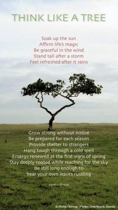Think like a tree. Be graceful in the wind. Stand tall after a storm. Feel refreshed after it rains. - Karen I. Spiritual Tattoo, Spiritual Quotes, Spiritual Path, Religious Quotes, Spiritual Awakening, Affirmations, Tree Quotes, Quotes About Trees, Sup Yoga