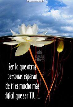 Ser lo que otras personas esperan de ti es mucho mas dificil que ser tu....