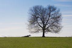 East Coast Joshua Tree