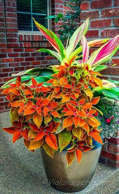 Looking for something unique and exotic? Send some tropical flower arrangements, tropical flowers, exotic plants and foliage to give the impression of a warm Container Flowers, Container Plants, Container Gardening, Succulent Containers, Gardening Tools, Vegetable Gardening, Gardening Supplies, Organic Gardening, Backyard Shade