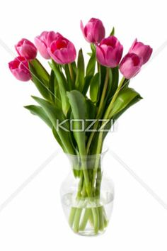pink tulips in a vase - Pink tulips in a vase isolated on white background