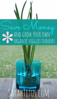 grow organic veggies