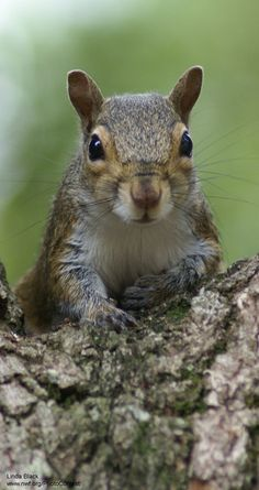 10 Nutty Facts to Make You Appreciate Squirrels -- in honor of National Squirrel Appreciation Day (January 21).