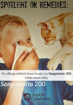Find out more about how to treat your cat allergies in this blog. ~joettecalabrese.com