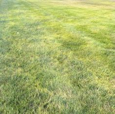 Overcome common lawn blights and return your grass to its former green glory.