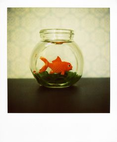 Bright little goldfish from a favorite photographer...