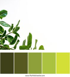 check out this green color palette I used in a branding project. Branding & Web Design Studio in Dallas, Texas. Green Colour Palette, Green Colors, Color Palettes, Branding Design, Logo Design, Web Design Studio, Web Design Projects, Dallas Texas, Color Theory