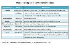 papel de la tiroides en el metabolismo de lipidos - Buscar con Google
