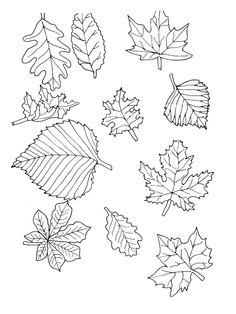 vorlage zum ausdrucken und ausmalen - unterschiedliche herbstblätter   basteln   pinterest