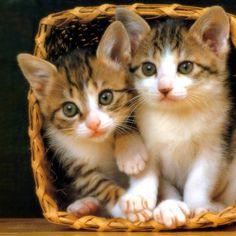 kittens1-2xnu03w0ol6yx3laq075l6.jpg (1024×1024)