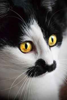 Cats eye by Noelie.LiLi, via Flickr