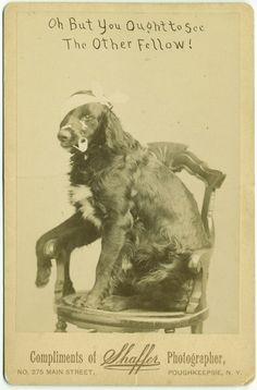 1885 albumen print