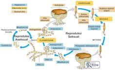 Gambar Struktur Euglena (anggota ganggang) | Biologi SMA ...