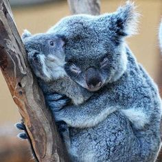 Mom hugs are the best type of hugs.. Fascinating Pictures (@Fascinatingpics) | Twitter