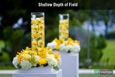 Shallow-DOF by SLR Lounge