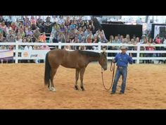 Balancing your horse with Warwick Schiller - YouTube
