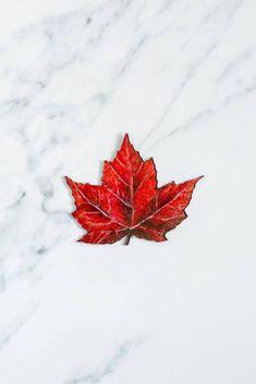 The maple leaf is one of the most classic shapes of the leaf.#windowfilmworld #windowfilm #screendoorsavermagnet #homedecor Film World, Screen Material, Window Film, Magnets, Doors, Shapes, Classic, Derby, Classic Books