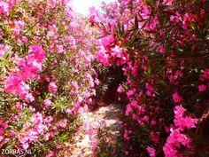 Information for holidays to Crete 7 - Zorbas Island apartments in Kokkini Hani, Crete Greece 2020 Beautiful Beaches, Most Beautiful, Crete Greece, Mountain Range, Strand, Nature, Plants, Holidays, Naturaleza