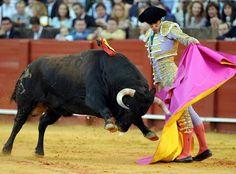 Toro de lidia es un deporte nacional. Toro de lidia es equivalente al béisbol en américa.